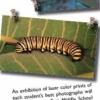 Brochure for Insect Safari Program