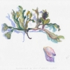 seaweed-shell-watercolor
